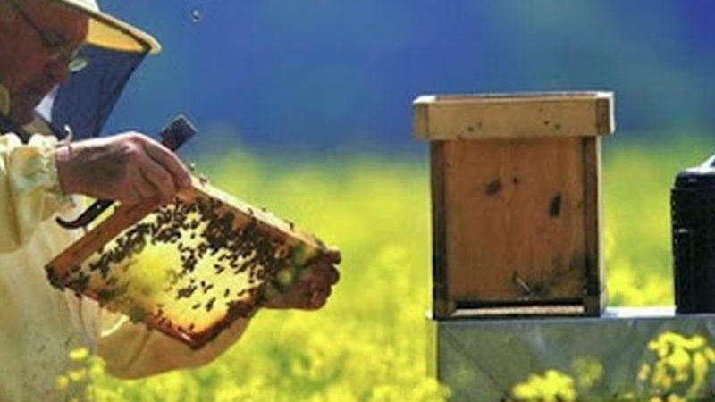Apicoltura: in arrivo fondi per i produttori calabresi