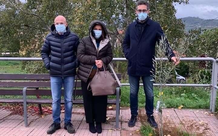 Giornata Nazionale degli alberi, Avanti Mendicino ha donato alla comunità piante di ulivo messe a dimora in alcune villette del paese
