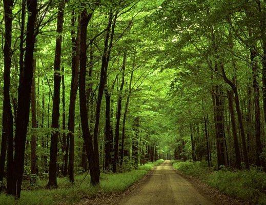 Forestazione: Calabria lasciata sola