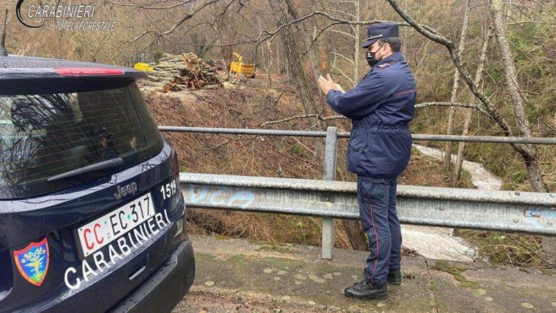 San Benedetto Ullano: Denunciata una ditta boschiva per furto e commercio illegale di legna