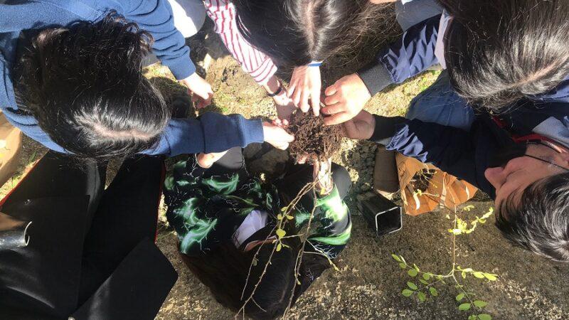 """""""Un albero per il futuro"""", il Comprensivo di Mandatoriccio partecipa con la piantumazione di 100 alberelli"""