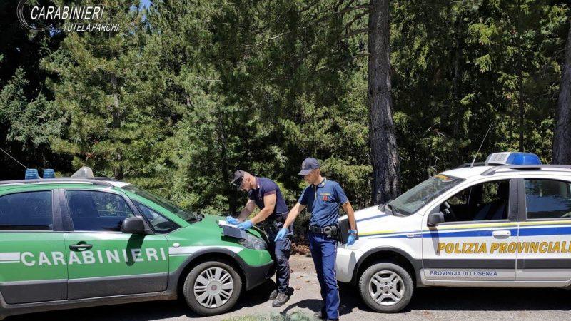 Tre persone denunciate dai Carabinieri Forestale per bracconaggio ittico nel Parco Nazionale della Sila