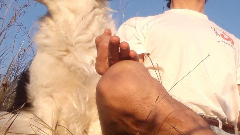 Yoga e Salute – Incontro domani a Rende con il maestro Ottaviano Fuoco