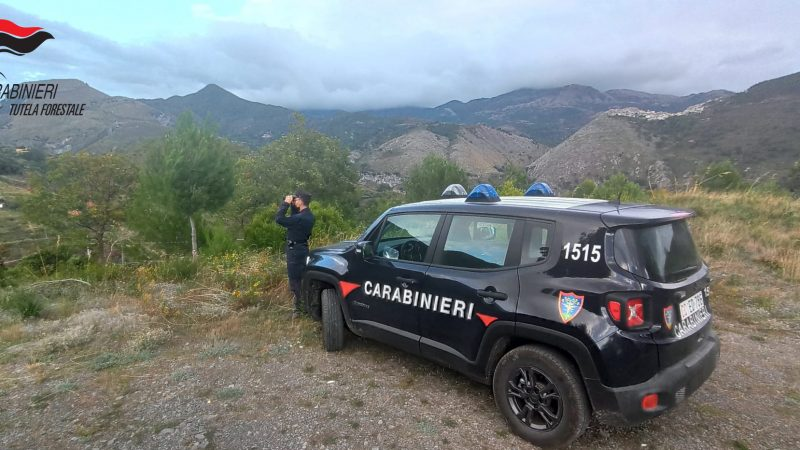 Controlli dei Carabinieri Forestali nei Comuni di Tortora e Aieta